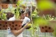 Câu chuyện về ông chủ vườn Phong Lan Phi Điệp đột biến tại Bình Phước