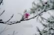 Rét tê buốt, dân mạng xuýt xoa chia sẻ lại ảnh tuyết rơi ở Nghệ An