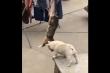 Clip: Chó giúp mèo trèo lên cao ăn vụng cá