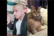 Clip: Mèo sững sờ khi chàng trọc chải đầu
