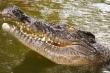 Ngư dân cạnh tranh quyết liệt giành 10.000 USD với cá sấu