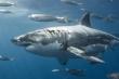 Mực chống trả quyết liệt, cá mập mang thân đầy thương tật