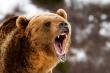Cầu có gấu dữ, làm thế nào để qua?
