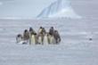 Đàn cánh cụt 'bảo kê' đồng đội bị chim cướp biển đánh