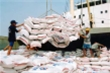 Siết hoàn thuế giá trị gia tăng xuất khẩu gạo qua biên giới Việt - Trung