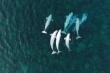 Video: Cuộc di cư của hơn 800 con cá voi Beluga
