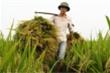 Thủ tướng yêu cầu xuất khẩu gạo hợp lý thời gian tới