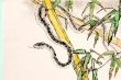 Tử vi 12 con giáp ngày 1/9:  Tuổi Tỵ túi tiền rủng rỉnh