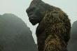 Hóa thạch 1,9 triệu năm tuổi hé lộ họ hàng của 'King Kong bản gốc'