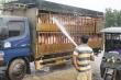 Thủ phủ chăn nuôi lớn nhất nước đẩy mạnh tái đàn, giá thịt lợn có giảm?