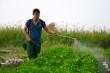 Video: Dịch COVID-19 bùng phát, nhà vườn trồng hoa Tết ở TP.HCM lao đao
