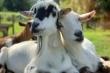 Tử vi hôm nay 2/10 của 12 con giáp: Tuổi Mùi gặp tình yêu sét đánh