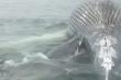 Cá mập rỉa xác cá voi, 'gây gổ' với nhân viên cứu hộ phá bĩnh bữa ăn