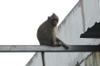 Video: Đàn khỉ 'đột nhập' khu dân cư ở TP.HCM quậy phá, trộm thức ăn