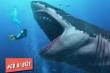 Có ai biết: Là loài vật nguy hiểm nhưng cá mập thực ra không muốn ăn thịt người