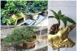 Đủ loại bonsai hình trâu độc đáo chơi Tết Tân Sửu 2021