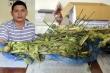 Bắt chủ phòng khám chẩn trị y học cổ truyền bán cây, quả thuốc phiện